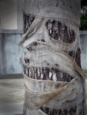 """人面""""木""""か人面""""樹""""かで迷いました。"""